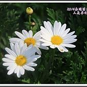 2014春遊苗栗D2203