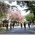 賞花趣。台南201507