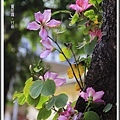 賞花趣。台南201511