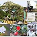 賞花趣。台南201537