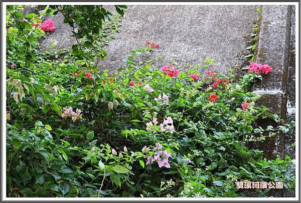 雙溪河濱公園201408