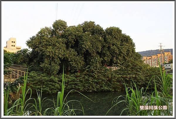 雙溪河濱公園201410