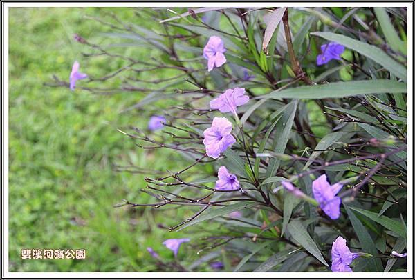 雙溪河濱公園201417