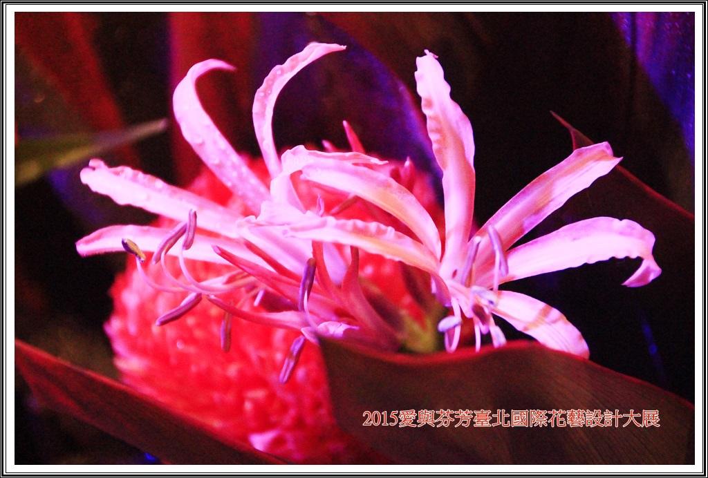 2015愛與芬芳臺北國際花藝設計大展04