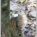 貓咪/台北植物園/20120410