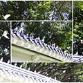 鴿子。中正紀念堂20150217