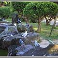 鴿群。中正紀念堂20140124