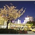 2014北陸櫻花紀行D4118