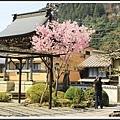 2014北陸櫻花紀行D5009