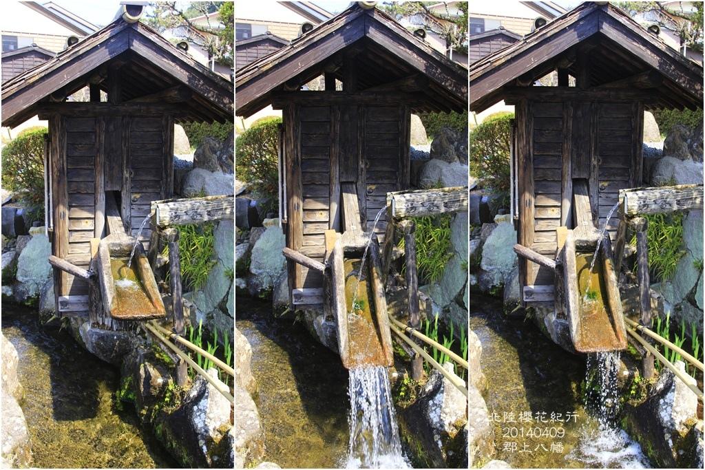 2014北陸櫻花紀行D5028