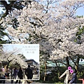 2014北陸櫻花紀行D5037