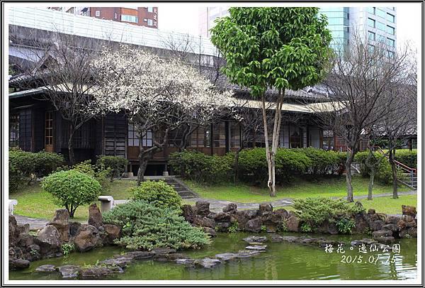 逸仙公園梅花20150115