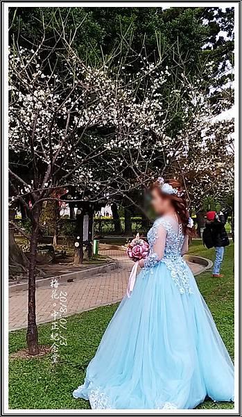 中正紀念堂梅花2018011302