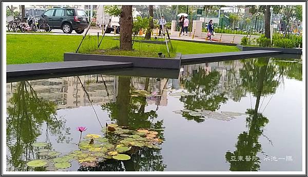 亞東醫院 水池一隅