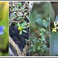 林家花園2013113009.jpg
