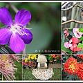 林家花園2014021601.jpg