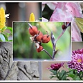 林家花園2014032300.jpg