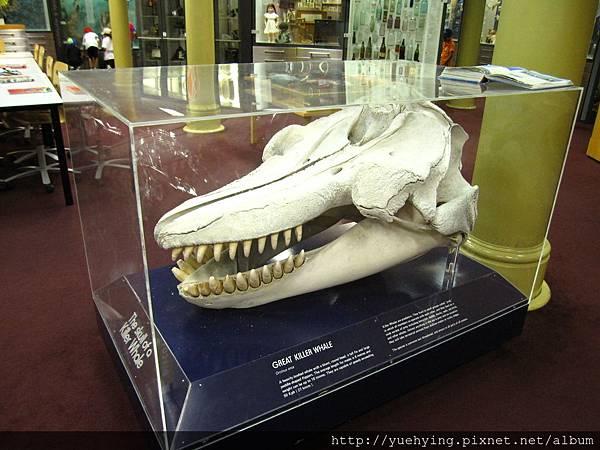 3-美術館7(經鯨魚牙齒)