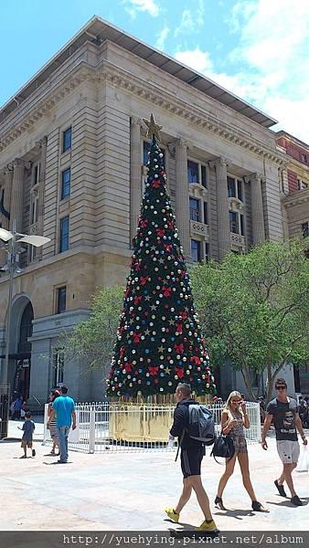 市區的聖誕樹