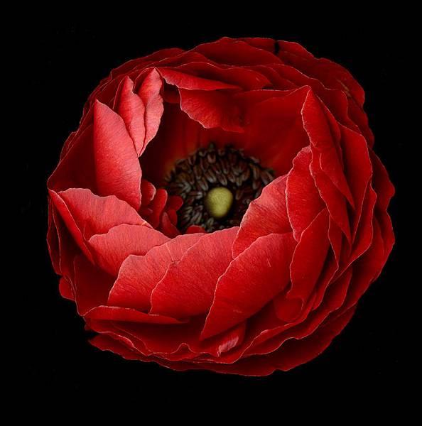 anemone850.jpg
