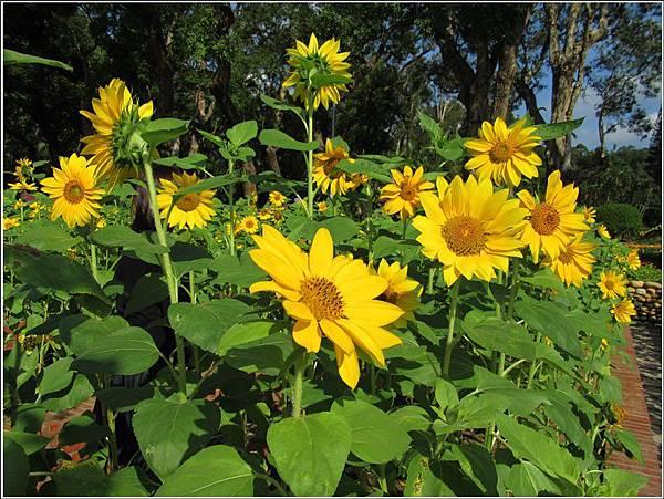 台北的後花園士林官邸賞花趣。