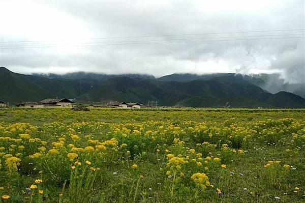 遍地的小黃花