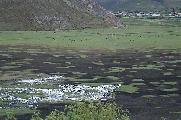 大草原上_沼澤濕地