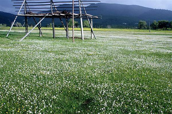 縣城附近_遍地小白花