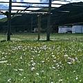 太陽城附近大草原