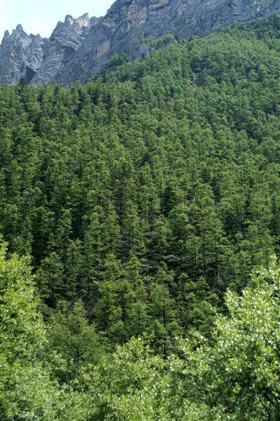 多樣的高山樹種2