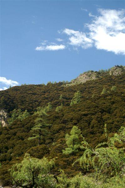 多樣的高山樹種3