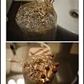 003豐年農場太空包-柳松菇05.jpg