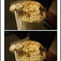 003豐年農場太空包-柳松菇10.jpg