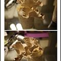 003豐年農場太空包-柳松菇12.jpg