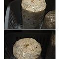 005豐年農場太空包-白雪菇01.jpg
