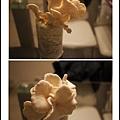 005豐年農場太空包-白雪菇09.jpg