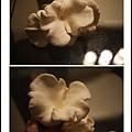 005豐年農場太空包-白雪菇10.jpg