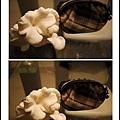 005豐年農場太空包-白雪菇11.jpg