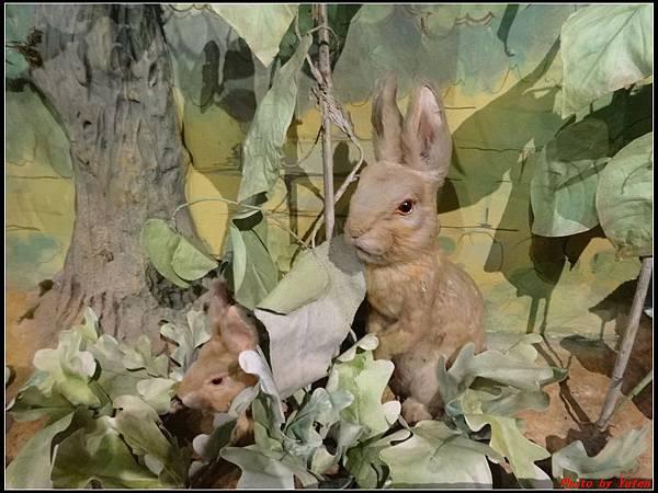 英倫daydaydaydayday5-5彼得兔的故事0117.jpg