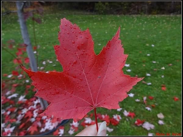 玩美加族-加拿大day2-5最後一根釘紀念碑0022.jpg