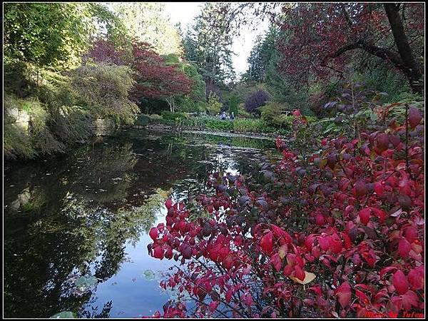 玩美加族-加拿大day7-3布查花園0062(001).jpg
