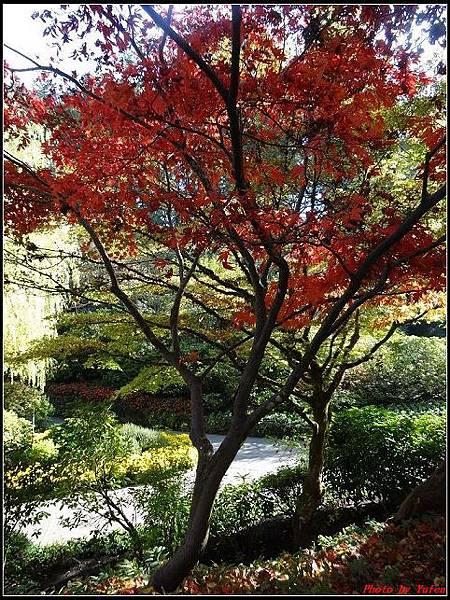 玩美加族-加拿大day7-3布查花園0078(001).jpg