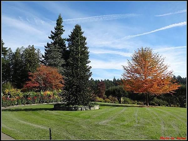 玩美加族-加拿大day7-3布查花園0113(001).jpg