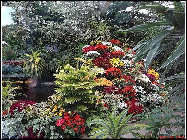 玩美加族-加拿大day7-3布查花園0220(001).jpg