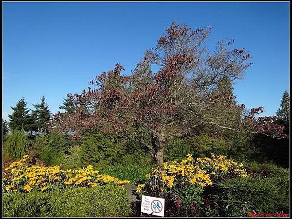 玩美加族-加拿大day8-2伊麗莎白女皇公園‧0041(001).jpg