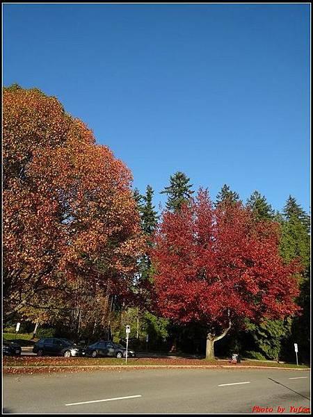 玩美加族-加拿大day8--9史丹利公園0048(001).jpg
