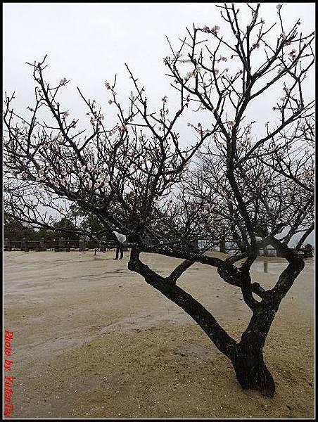 日本-四國之旅day3-6松山城纜車037.jpg