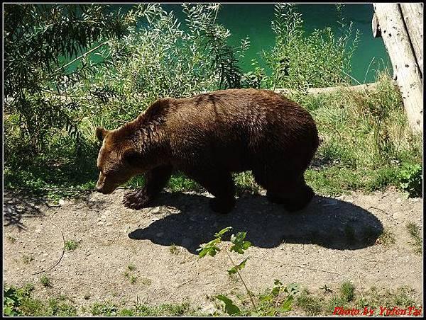 德瑞day4-5熊公園0023.jpg
