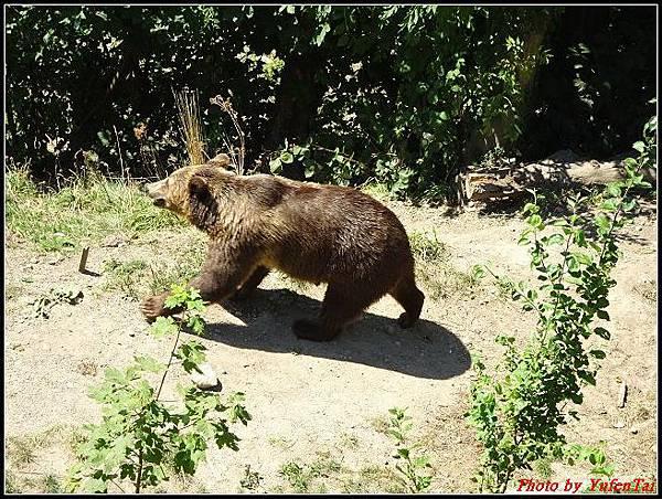 德瑞day4-5熊公園0024.jpg