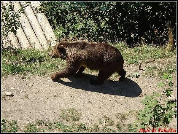 德瑞day4-5熊公園0025.jpg